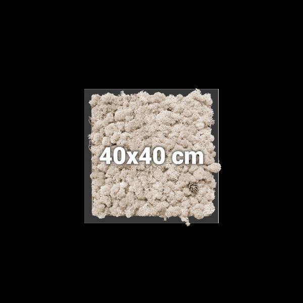 Moosbild, quadratisch, 40x40 cm