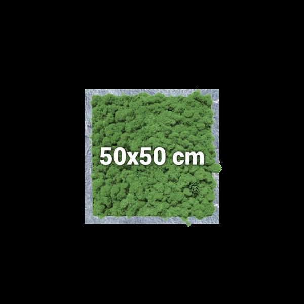 Moosbild, quadratisch, 50x50 cm